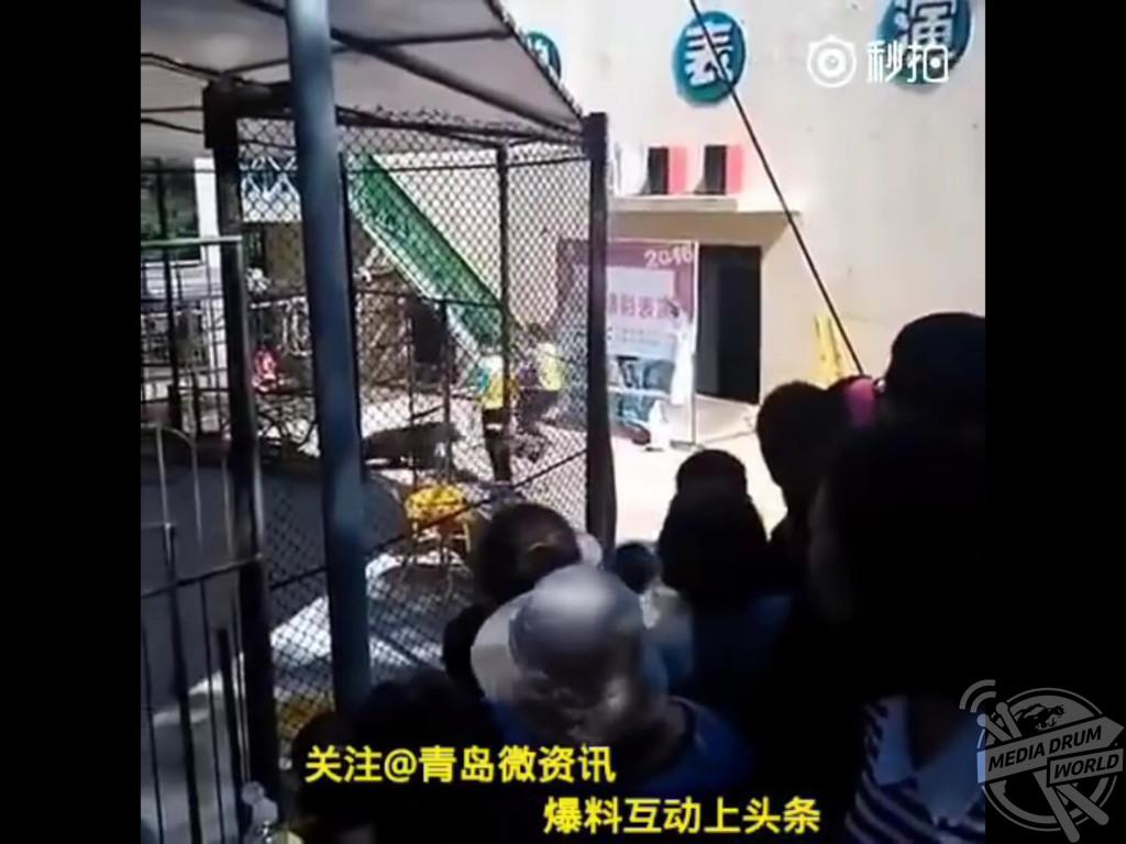 Animals Asia / mediadrumworld.com