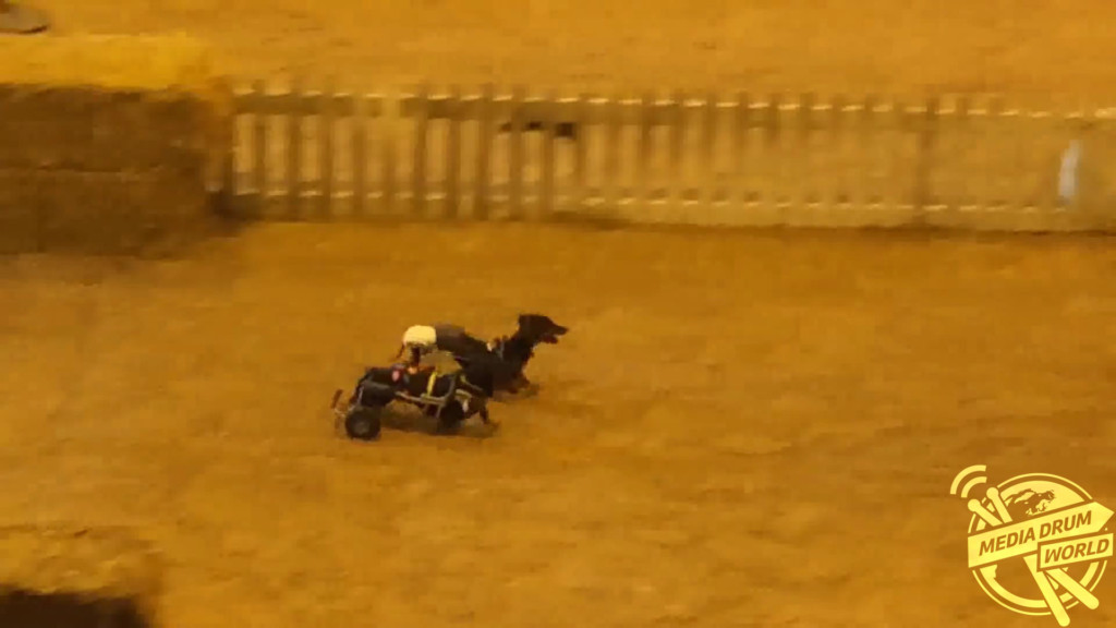 Wheelchair Dog Race