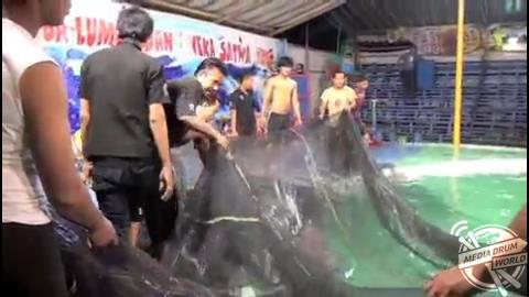 Dolphin Circus