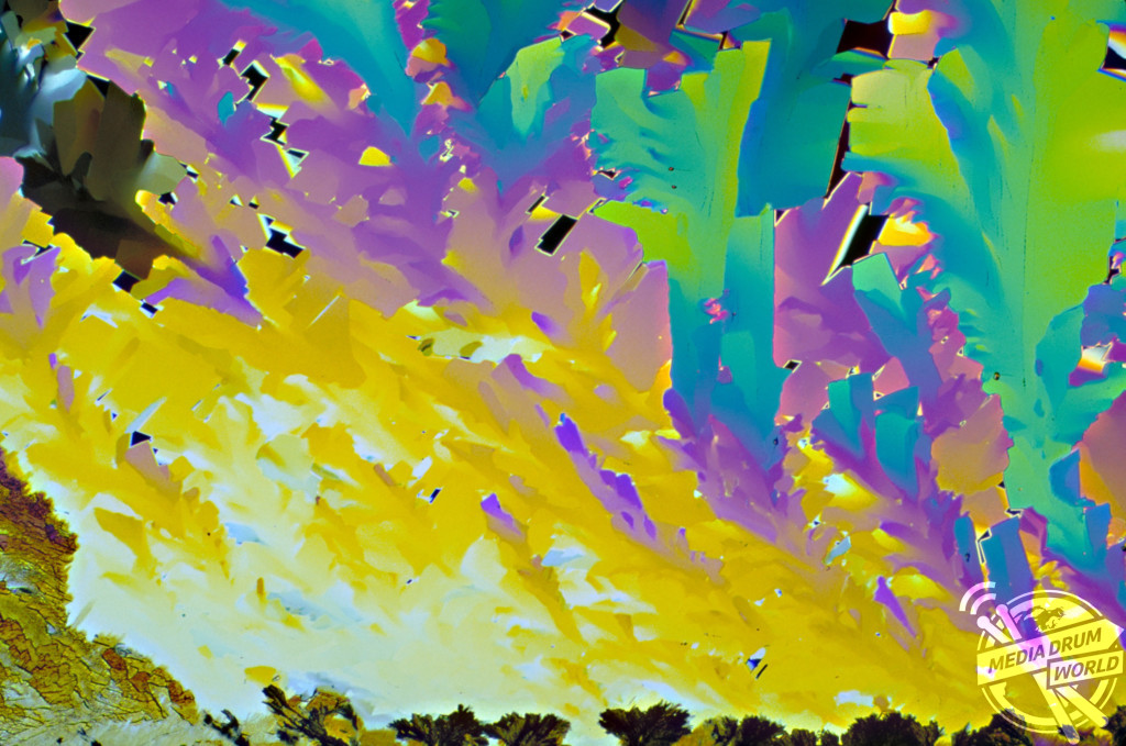 Light micrograph (LM) of Beta-carotene crystals. Dennis Kunkel / SPL / mediadrumworld.com