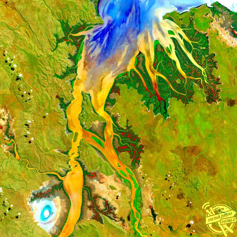 Ord River estuary, satellite image. Mangroves (dark green) grow along the banks of the Ord River in the Kimberley region of Western Australia. Yellow, orange, and blue colours indicate the flow patterns of sediment and nutrients in this tropical estuary. The bright spot at lower left is an area of mudflats, home to saltwater crocodiles.  US Geological Survey / SPL / mediadrumworld.com