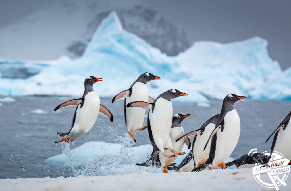 Incredible Images Of Dancing Penguins Could Be The Real Happy Feet